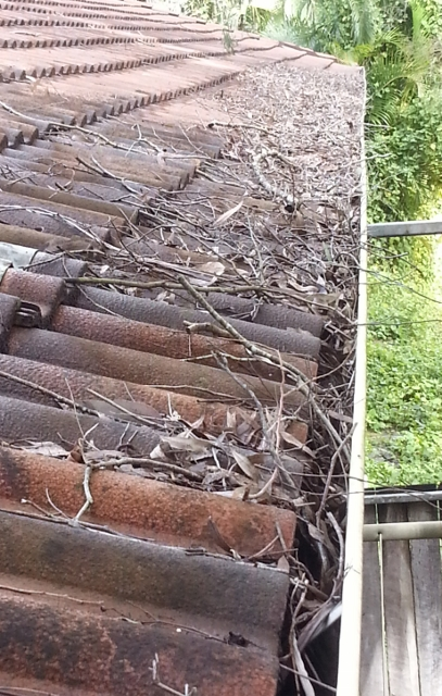 good gutter guard will stop this problem