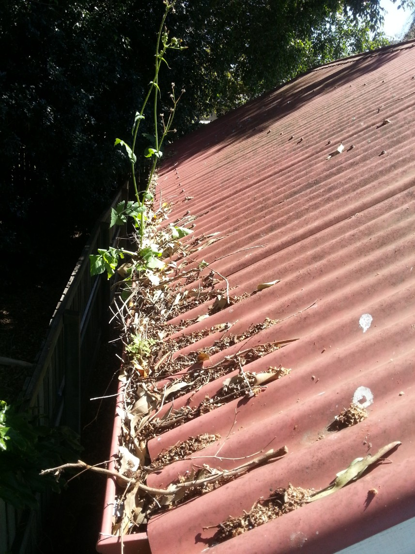 Gutters overflowing with weeds